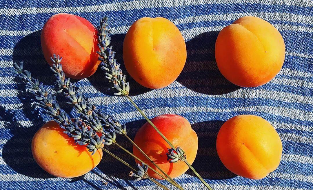 6+1 λόγοι που τα βερίκοκα είναι το απόλυτο superfood του καλοκαιριού Βρήκαμε 7 ακόμα λόγους να το επιλέγεις για υγιεινό snacking στην παραλία.