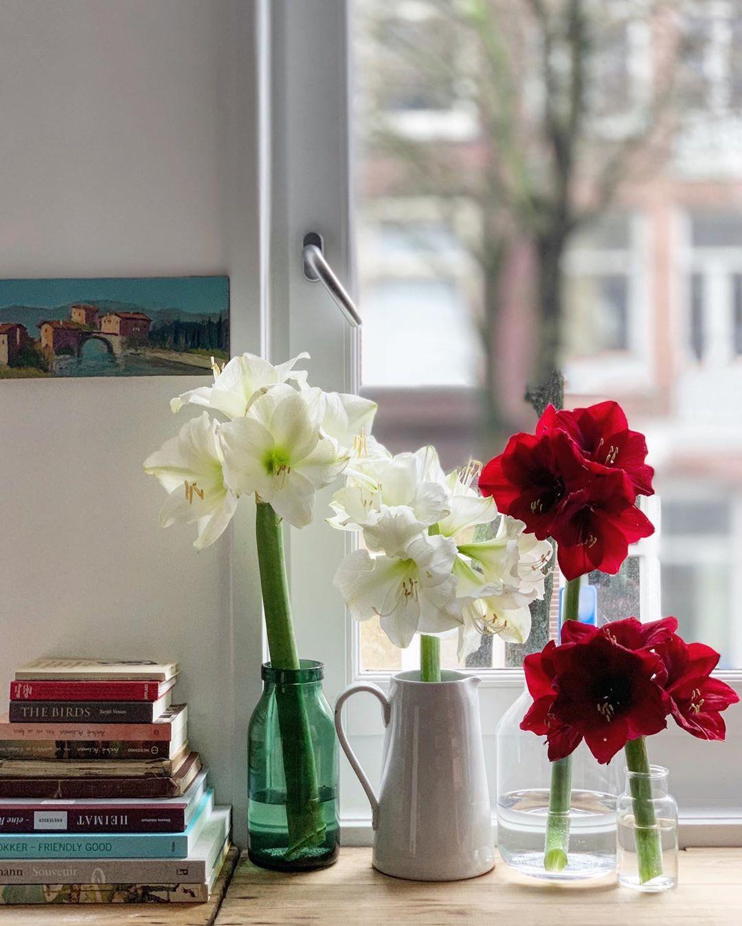 O Έλληνας στο Άμστερνταμ που θα σε κάνει να ερωτευθείς τα λουλούδια