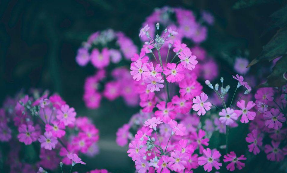 Το «Λουλούδι του Δαρβίνου» καλλιεργείται για πρώτη φορά στην Ελλάδα Σε φυσικό εργαστήριο για την καταγραφή και παρατήρηση της κίτρινης πρίμουλας (Λουλούδι του Δαρβίνου) αναδεικνύεται το τελευταίο διάστημα ο Χορτιάτης της Θεσσαλονίκης