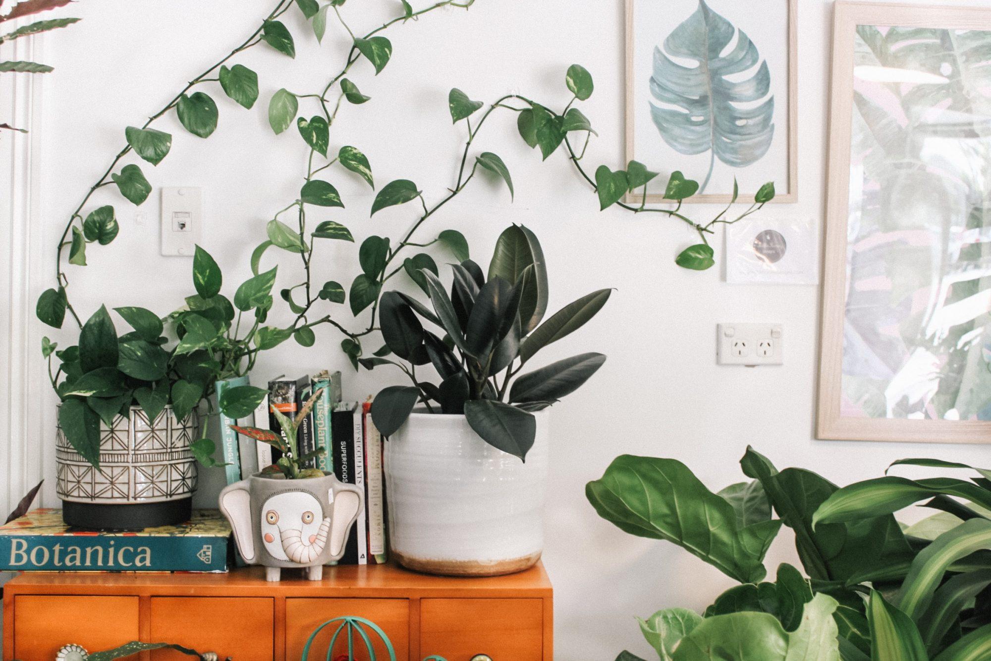 Γιατί ξεραίνονται τα φυτά μου και πώς θα τα σώσω; Εμείς θα σου πούμε που ξέρουμε!